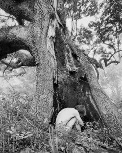 Man in Tree Hole